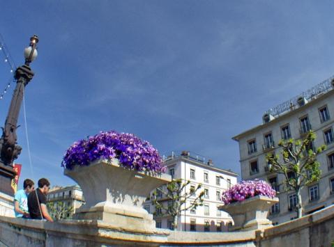 клумбы и цветы